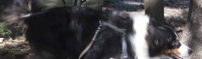 Cani e padroni a lezione di protezione civile. A Vallombrosa grande successo per il corso di formazione di unità cinofile