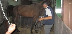 Cavalli 1.JPG
