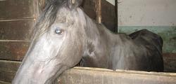 Cavalli 3.JPG