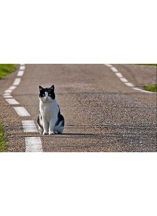 Avvelenati tre gatti con anticrittogamici: due sono morti