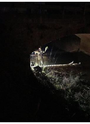 Enpa, vigili del fuoco e carabinieri salvano due labrador finiti in un dirupo