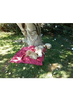 Ondata di cuccioli abbandonati: 20 in attesa di adozione