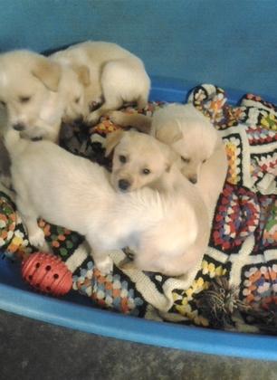 Forestello, ancora abbandoni. L'ultimo caso riguarda una cagnolina incinta: dieci i cuccioli