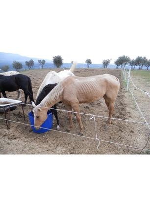 La Procura non convalida il sequestro, i cavalli rimangono abbandonati. Ad accudirli la Italian Horse Protection