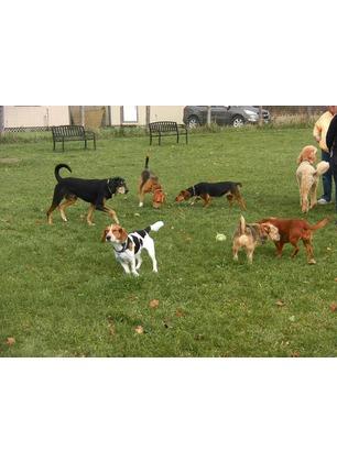 A Forestello nasce l'area di sgambatura per cani. 78mila euro dalla Regione Toscana