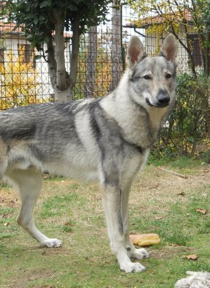 Torna l'allarme per i bocconi avvelenati:ieri pomeriggio è morto Buck, un cane di San Biagio