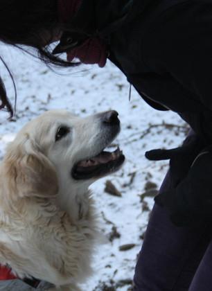 Cani e padroni diventano soccorritori a Vallombrosa