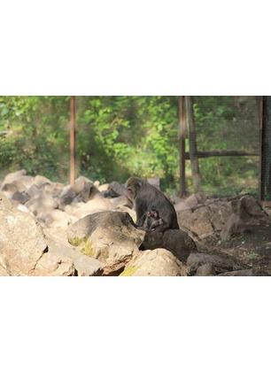 """Lieto evento al Parco naturale: è nato """"Ultimo"""", un piccolo macaco"""