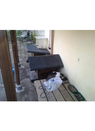 Istituita una colonia felina a Troghi, se ne occuperà un privato