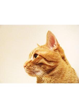Oggi è la Giornata del Gatto, uno degli animali domestici preferiti dalle famiglie