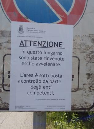 """Argini dell'Arno, cartelli di allerta per i bocconi avvelenati. La Polizia municipale: """"Prestate attenzione e denunciate"""""""