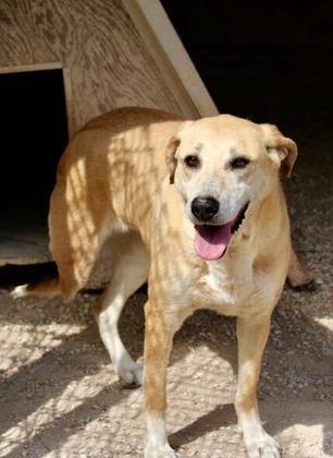 Persa nell'area di servizio Arno est: è una cagnolina tripode. I proprietari lanciano un appello