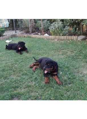 Gravissimo episodio al Matassino: due Rottweiler uccisi con l'acido nel giardino di casa