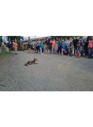 La volpe riappare e intrattiene gli ospiti del campeggio