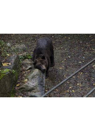 L'addio a Bruno: le sue ceneri saranno sparse nel Parco. La commozione dei valdarnesi