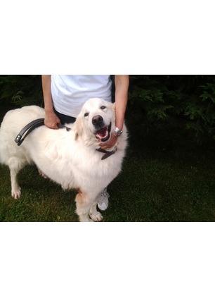 """Cani randagi, il Comune darà un contributo alle famiglie per l'affidamento: """"Obiettivo migliorare la vita degli animali e risparmiare"""""""