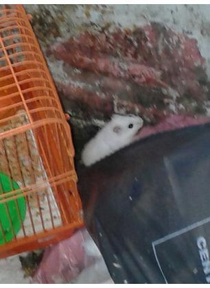 Abbandoni di animali: un criceto gettato con la gabbia nella spazzatura