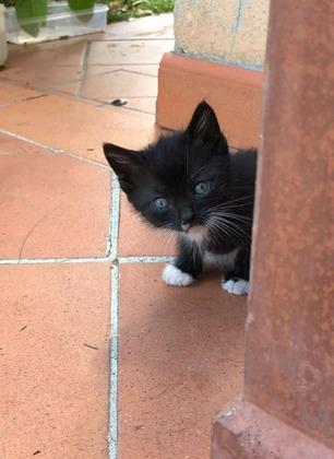 """Enpa Valdarno: """"Ancora tanti gattini da adottare"""""""