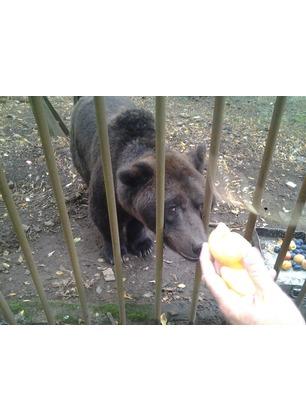 """Orso Bruno, il veterinario: """"Ho sempre rispettato la sua fierezza e la sua dignità. Mi ha dato tanto"""""""