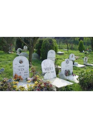 La Regione approva il regolamento per i cimiteri destinati agli animali di affezione. A Cavriglia pronto il progetto