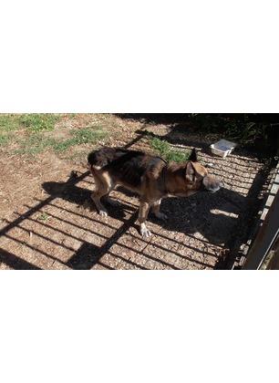 La polizia municipale libera un cane maltrattato. Adesso è in clinica