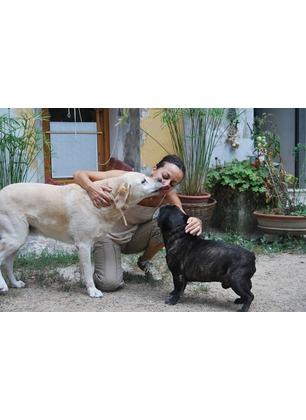 In viaggio con i nostri animali domestici: il parere di Marina Menichelli