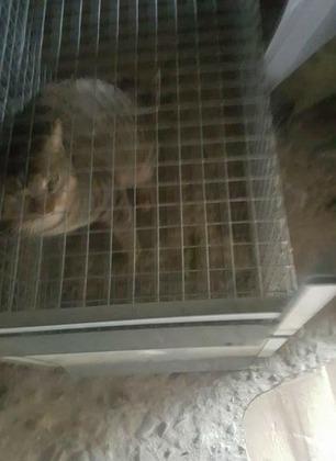 Perdono il gatto e lo ritrovano chiuso in gabbia nel garage di un vicino