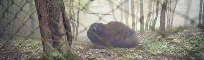 Trasferimento del bisonte Arturo dal Parco: M5S chiede che il sindaco riveda la decisione del Comune