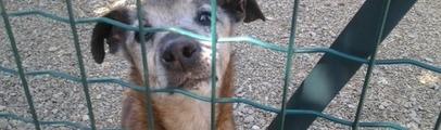 Cani in fuga per i botti. Il servizio veterinario della Asl interviene anche a Figline