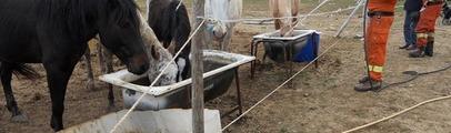 Controlli di Asl e vigili urbani: i cavalli saranno portati in un altro maneggio
