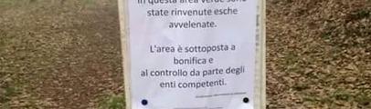 Cani, l'allarme dei residenti: torna l'incubo dei bocconi avvelenati a San Biagio