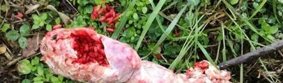 """Ancora salsicce avvelenate in Oltrarno. Enpa Valdarno: """"Massima attenzione per animali e bambini"""""""