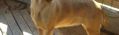 Il Tribunale condanna un veterinario e il titolare di un centro di addestramento per la morte di due cani