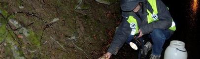 'Operazione Bufo Bufo': al via la campagna salva anfibi del WWF