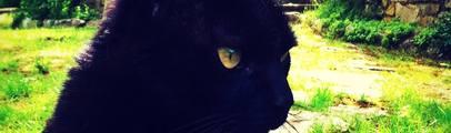 Gatti aggrediti e feriti gravemente al muso con un bastone. Uno rischia di diventare cieco. Non sono casi isolati