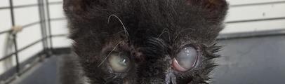 Gattina cieca abbandonata vicino a un cassonetto: Enpa Valdarno lancia un appello