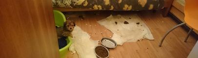 La guardia di finanza sequestra un allevamento abusivo di cani. I cuccioli venduti on line. Oltre 70 gli animali liberati