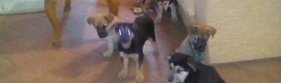 Abbandonati nei boschi sei cagnolini di due mesi. Ora sono al sicuro e cercano una famiglia