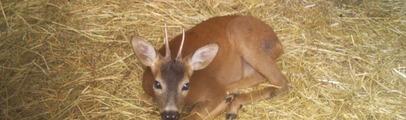 Animali selvatici: soccorso 24 ore su 24. Convenzione tra Regione e Sos animali onlus