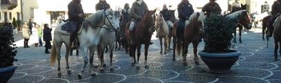 Cani e gatti, cavalli e caprette: tutti in piazza per la benedizione degli animali